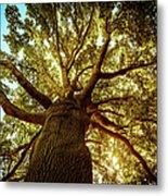 Tall Green Tree In Spring Metal Print