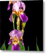 Tall Iris Metal Print