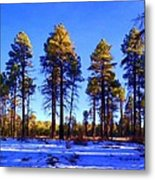 Tall Ponderosa Pine Metal Print