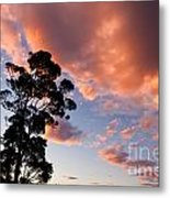 Tall Tree Against A Dramatic Sunset Clouds Sky Metal Print