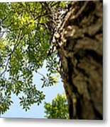 Tall Tree Metal Print by Stephanie Grooms