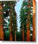 Tall Trees In Yosemite National Park Metal Print