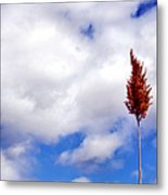 Tall Trunks Metal Print