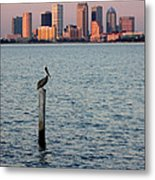 Tampa Skyline And Pelican Metal Print