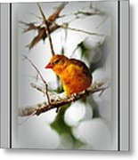 Tanager 4296-ttp Metal Print
