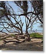 Tangle Of California Trees Metal Print