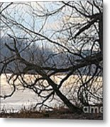 Tangled Branches Metal Print