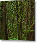 Tangled Forest Metal Print