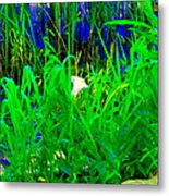 Tangled Garden On The Canal Canadian Art Montreal Landscapes Lachine Quebec Scenes Carole Spandau  Metal Print