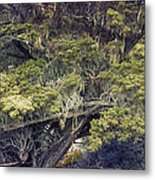 Tangled Neighbors Of The Lone Cypress Metal Print