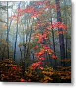 Tanglewood Forest Metal Print by William Schmid