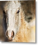 Taos Pony X Metal Print