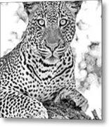 Tarangire Leopard Metal Print
