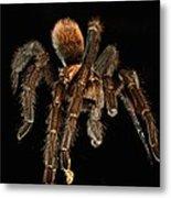 Tarantula Love  Metal Print