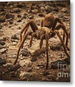 Tarantula Metal Print
