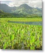 Taro Fields In Hanalei National Metal Print