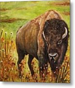 Tatanka, Buffalo  Metal Print