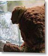 Tattered With Love Metal Print