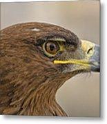 Tawny Eagle 3 Metal Print