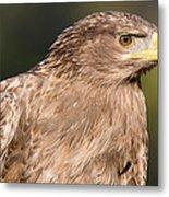 Tawny Eagle Portrait Metal Print