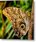 Tawny Owl Butterfly Metal Print