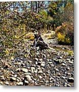 Taylor Creek Lake Tahoe Metal Print