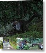Tayra Costa Rica Animals Zoo Habitat Indigenous Population Mixing With Travellers Enjoying And Being Metal Print