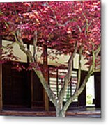 Tea House Thru The Maple Metal Print