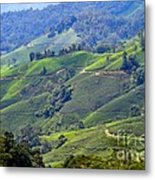 Tea Plantation In The Cameron Highlands Malaysia Metal Print