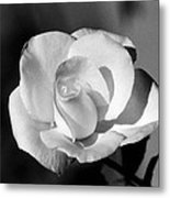 Tea Rose 01 - Infrared Metal Print