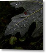 Tears Of A Leaf Metal Print by Michael Murphy
