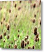 Teasel Meadow Metal Print