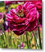 Tecolote Ranunculus Flowers By Diana Sainz Metal Print