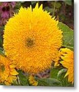 Teddy Bear Sunflower 2 Metal Print