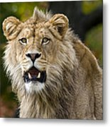 Teenage King Of The Beast Metal Print