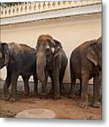 Temple Elephants Maharaja's Palace India Mysore Metal Print
