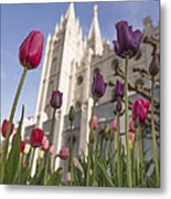Temple Tulips Metal Print by Chad Dutson
