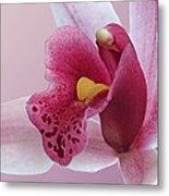 Temptation - Pink Cymbidium Orchid Metal Print