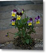 Tenacity Comes In Small Packages Metal Print by The Stone Age