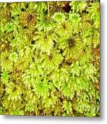 Tender Fresh Green Moss Background Texture Pattern Metal Print