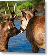 Tender Kiss. Deer In The Pamplemousse Botanical Garden. Mauritius Metal Print by Jenny Rainbow