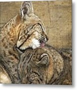 Tender Loving Care Metal Print