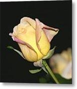 Tender Rose Metal Print