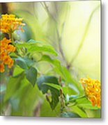 Tenderness Of Morning Metal Print