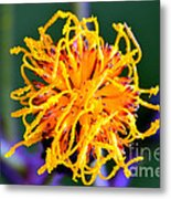 Tendril Metal Print