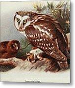 Tengmalms Owl Metal Print