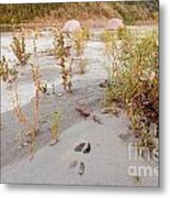 Tents At Yukon River In Remote Taiga Wilderness Metal Print