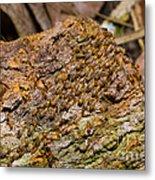 Termites On Log Metal Print by William H. Mullins