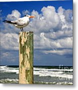Tern On A Piling Metal Print