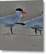 Terns In The Wind Metal Print by Helen Carson